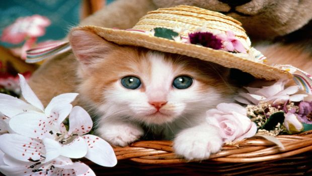 cats_free_wallpapers