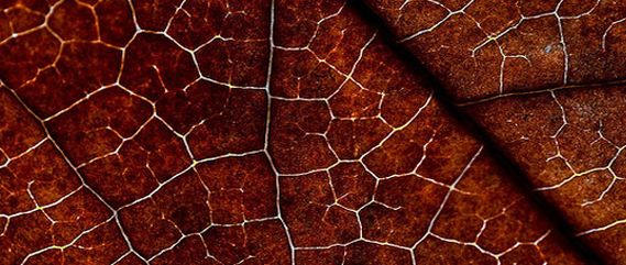 free-leaf-nature-textures