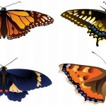 Free 3D Vector Art Butterfly Graphics Download