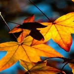 13 Free Autumn Leaves Wallpapers HD