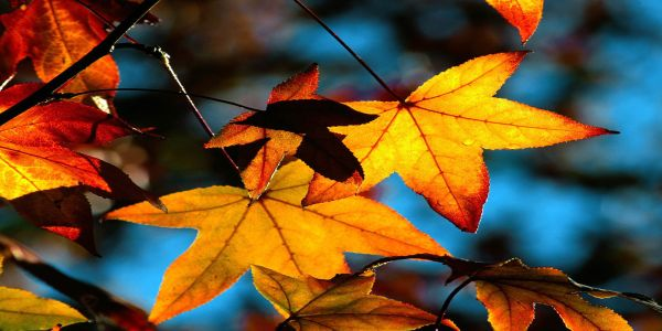 free-leaf-autumn-nature-wallpapers-download