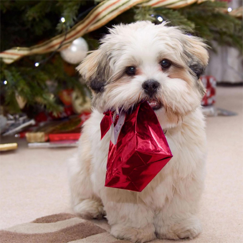 Free Christmas Puppy Wallpaper For Ipad