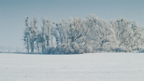 Free Winter Trees Desktop Background