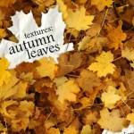 80+ Autumn Leaves Textures Set