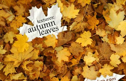 Free autumn leaves textures backgrounds