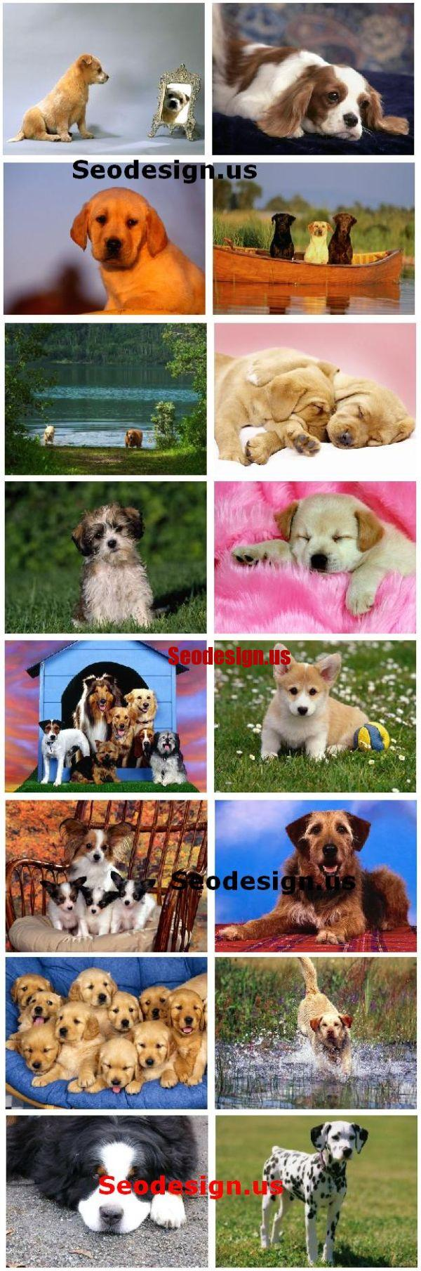 20 Free Cute Puppy Dogs Puppies Wallpapers HD