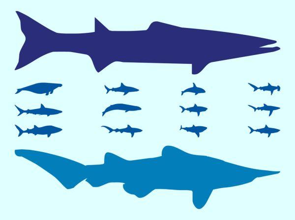 40+ Sea Fish Vector Silhouettes