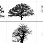 28 Free Photoshop Tree Brushes