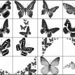 16 Black White Butterfly Brush