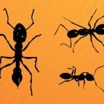 3 Ant Clip Art Graphics