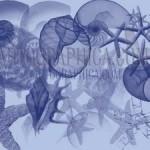 Blue Sea Stars Shells Photoshop Brushes